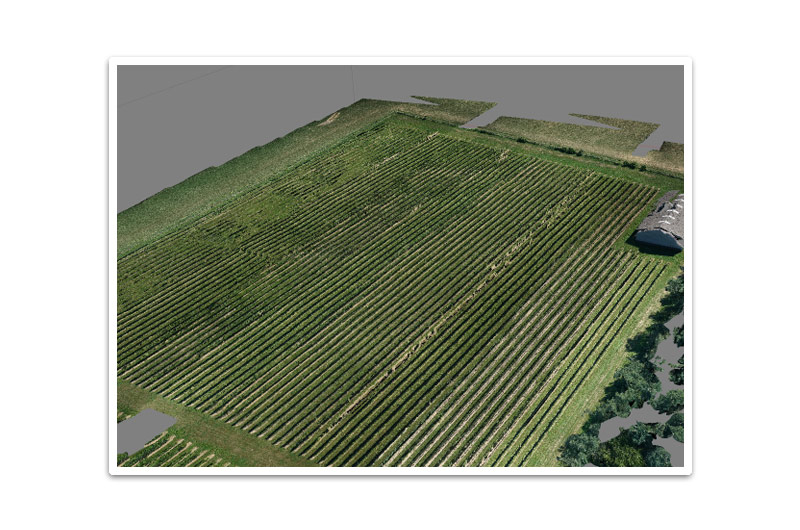 UAV Photogrammetry Vineyard Agriculture